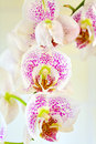 Orchid flower close up of a on yellow background Royalty Free Stock Photos