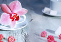 Orchid flower and cup Royalty Free Stock Photo