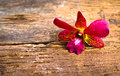 Orchid flower fresh beautiful on old wood Stock Photography