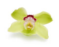 Orchid flower green isolated on a white background Stock Photo