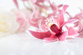 Orchid flower on neutral floral background single Royalty Free Stock Images