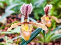 Orchid Flower In Thailand Royalty Free Stock Photo