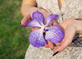 Orchid flower vanda in the hands woman holding a purple Stock Photos