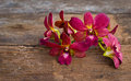 Orchid flower on wood fresh beautiful old Royalty Free Stock Photography