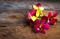 Orchid flower on wood plank fresh beautiful old Stock Images
