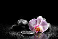 Orchid flower with zen stones on black background Stock Photography
