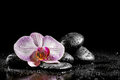 Orchid flower with zen stones on black background Royalty Free Stock Photography