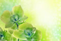 Orchid flowers beauty green on beauty background Royalty Free Stock Photo