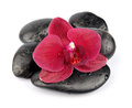 Orchid flowers on black stones on white Stock Photos