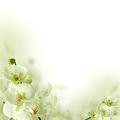 Orchid flowers and greenery, floral background Royalty Free Stock Photo