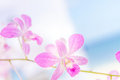 Orchid Flowers Over Natural Ba...