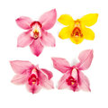 Orchid flowers pink and yellow on white clipping path included Royalty Free Stock Photos