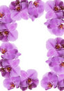 Orchid frame Royalty Free Stock Photo