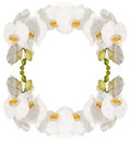 Orchid the frame of the beautiful white orchids isolated on a white background Stock Images
