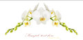 Orchid the frame of the beautiful white orchids isolated on a white background Royalty Free Stock Photo