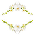 Orchid the frame of the beautiful white orchids isolated on a white background Stock Image