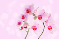Orchid fresh flowers orchids on pink background Stock Photos