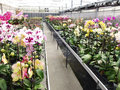 Orchid garden greenhouse nursery of flowers and plants for Royalty Free Stock Photos