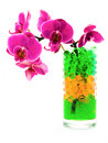 Orchid in glass with hydrogel Royalty Free Stock Photos