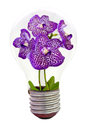 Orchid inside the light bulb Royalty Free Stock Images