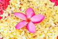 Orchid pink flower spa beautiful Stock Photos