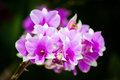 Orchid is a plant with beautiful flowers wong there are a variety of colors patterns sizes shapes and smells of flowering Royalty Free Stock Photography