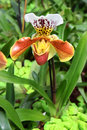 Orchid predator bright flower of that feeds on insects Stock Photo