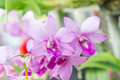 Orchid purple flowers on nice day Royalty Free Stock Photo