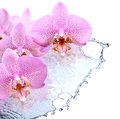 Orchid and water nice pink flowers above splashing Royalty Free Stock Photos