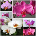Orchidea phalaenopsis mixture of varieties colour blossoms Stock Images