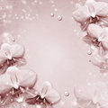 Orchids border or framewith pearls Royalty Free Stock Photo