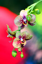 Orchids and buds with spots spotted colorful abstract background Stock Images
