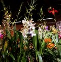 Orchids fascination exhibition of colorful flowers in Garching, Germany Royalty Free Stock Photo