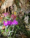 Orchids fascination exhibition of colorful flowers in their environment in Garching, Germany Royalty Free Stock Photo