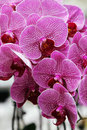 Orchids III Royalty Free Stock Images
