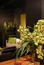Orchids in interior Royalty Free Stock Image