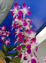 Orchids Are One Of The Most Di...