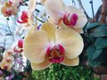 Orchids petty lovely in the world Royalty Free Stock Image