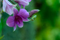 Orchids purple and green nature background Royalty Free Stock Photo
