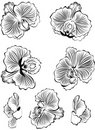 Orchids. Vector illustration  Stock Image