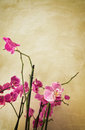 Orchids on vintage background Royalty Free Stock Photo