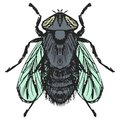 Ordinary fly hand drawn sketch cartoon illustration of Stock Photos