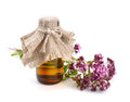 Oregano flowers with pharmaceutical bottle. Royalty Free Stock Photo