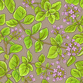 Oregano vector pattern