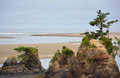 Oregon beach with rocks and trees Royalty Free Stock Photo