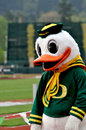 Oregon Duck Royalty Free Stock Image