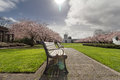 Oregon State Capitol Building with Cherry Blossom Trees Royalty Free Stock Photo