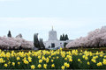 Oregon state capitol building salem oregon spring daffodils water flowing sprague memorial fountain foreground Stock Photo