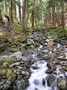 Oregon state forest stream in usa Royalty Free Stock Photos