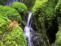Oregon waterfall with fall fern moss covered rocks split by brownish orange nearby Royalty Free Stock Photo